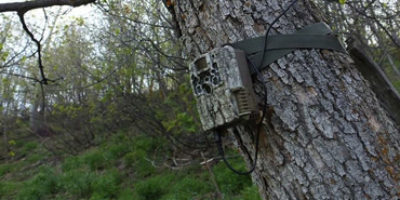 trail camera reviews 2020