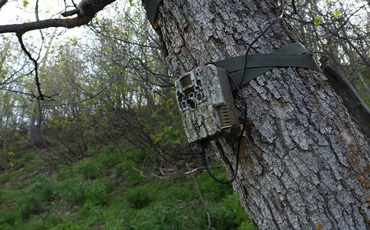 Browning Trail Camera