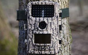 Foxelli Trail Camera Featured Image